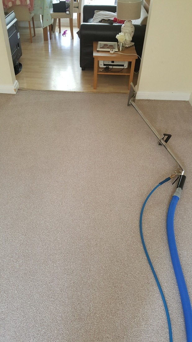 Carpet clean after in Lincoln home